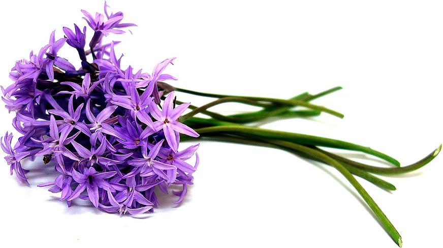 garlic scape flowers